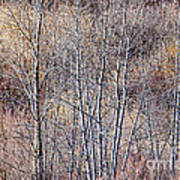 Brown Winter Forest With Bare Trees Poster