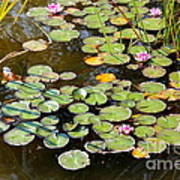 Bruges Lily Pond Poster by Carol Groenen
