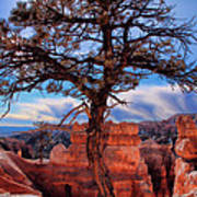 Bryce Canyon Middle Tree Poster