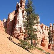 Bryce Canyon Red Fins Poster
