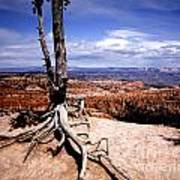 Bryce Canyon State Park Poster