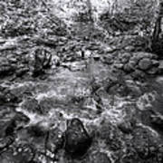 Bubbling Water Brook In The Smokies Poster