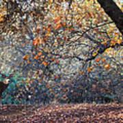 Buck And Fall Foliage Poster