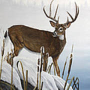 Buck At Waters Edge Poster