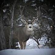 Buck I Poster