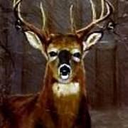 Buck On Slate  Poster