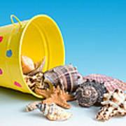 Bucket Of Seashells Still Life Poster by Tom Mc Nemar