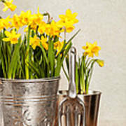 Buckets Of Daffodils Poster by Amanda Elwell