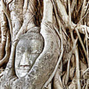 Buddha Head In Tree Wat Mahathat Ayutthaya  Thailand Poster by Fototrav Print