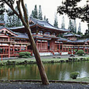Buddhist Temple, Byodo-in Temple Poster
