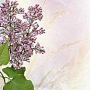Budding Lilac Flowers Poster