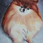 Buddy - Pomeranian Poster