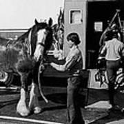 Budweiser Clydesdales Los Vaqueros Rodeo Parade Tucson Arizona 1984 Poster
