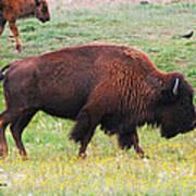 Buffalo Mom Poster