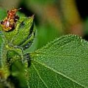 Bug On Leaf Poster