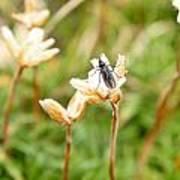Bug On White Flower Poster
