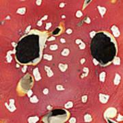 Bugaboo - Amanita Muscaria Poster