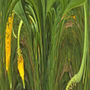 Bulbinella Latifolia Abstract Poster