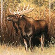 Bull Moose Poster by Karen Cade
