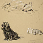 Bull-terrier, Spaniel And Sealyhams Poster