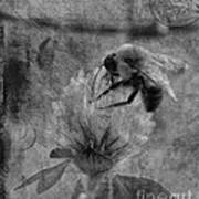 Bumble Bee Post Card 2 Bw Poster