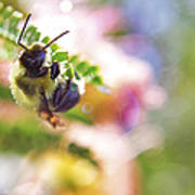 Bumblebee Disco Poster