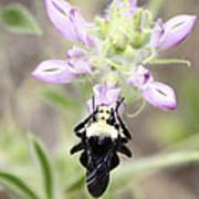 Bumblebee Heaven Poster