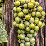 Bunch Of Grapes Poster
