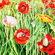 Bunch Of Poppies II Poster