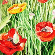 Bunch Of Poppies IIi Poster