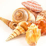Bunch Of Shells Poster by Jean Noren