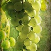 Bunch Of Yellow Grapes Poster