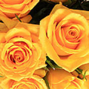 Bunch Of Yellow Roses Poster