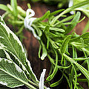 Bunches Of Fresh Herbs Poster