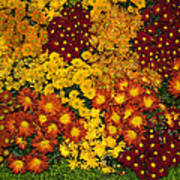 Bunches Of Yellow Copper Orange Red Maroon - Hot Autumn Abundance Poster