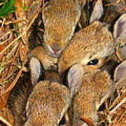 Bunny Babies Poster