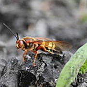 Burn Pile Bee Poster
