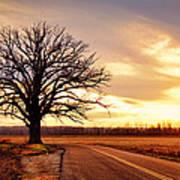 Burr Oak Silhouette Poster