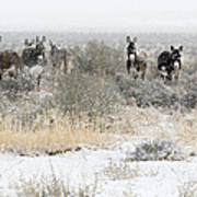 Burros In The Snow Poster