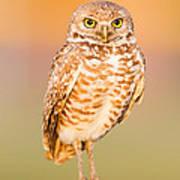 Burrowing Owl II Poster