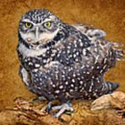 Burrowing Owl Portrait Poster