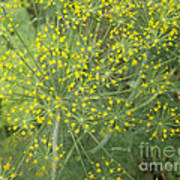 Bursting Dill Plant Poster