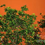 Bushfire Skies Poster