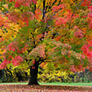 Busse Woods Fall Color Poster