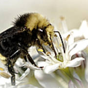 Busy As A Bee Poster