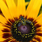 Busy Bee Poster