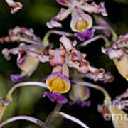 Busy Orchids Poster
