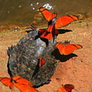 Butterflies And Turtle Poster