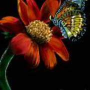 Butterfliy Poster