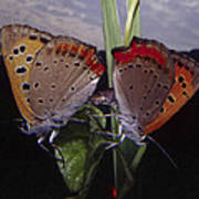 Butterfly 001 Poster